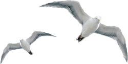 Website-Seagull